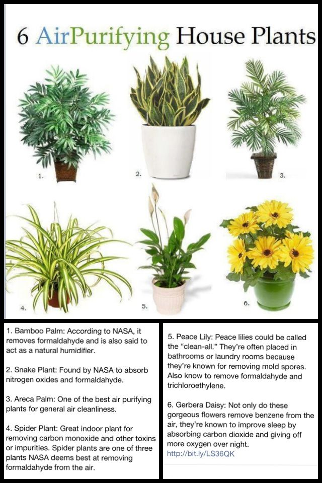 Oxygen Rich Plants For The Home