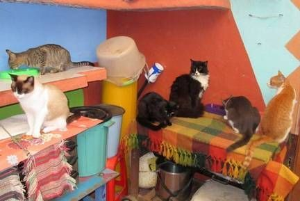 catsitters Needed in beautiful Santa Maria del Oro