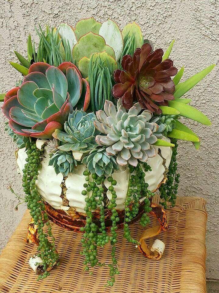 Container Garden Of Succulent Gardening Ideas Pinterest Kak Garten Sukkulenten And Bepflanzung