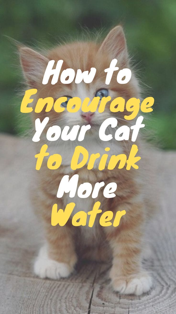 10 Ways To Get Your Cat To Drink More Water Cats Funny Natural Pet Care Cats Funny Cat Photos