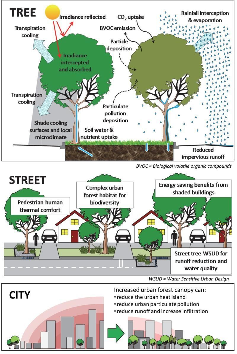 Urban Or Street Tree Benefits Urban Trees Pinterest