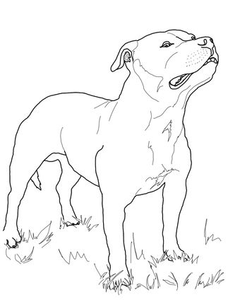Click The Staffordshire Bull Terrier Colouring Page To View The