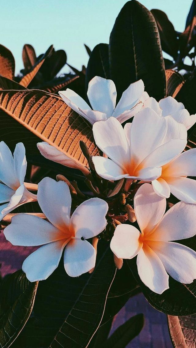 Beautiful flowers iPhone wallpaper