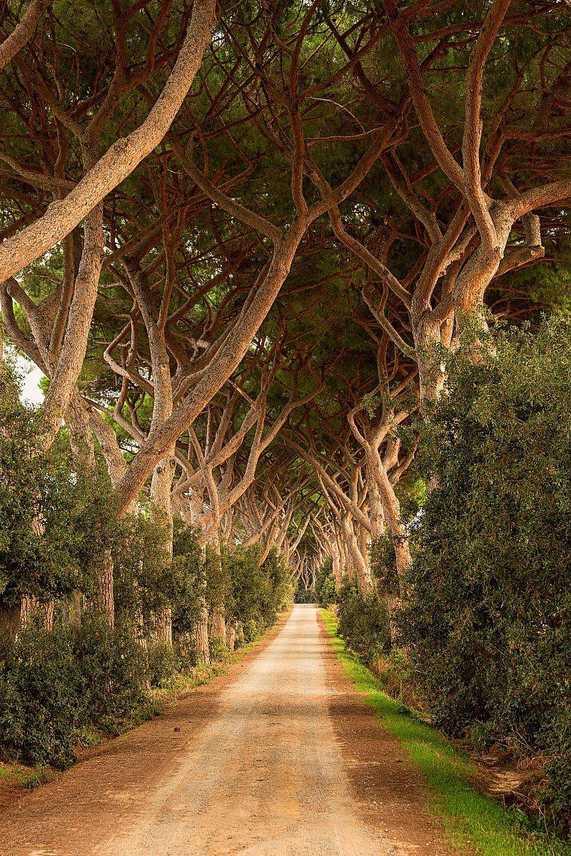 Ağar Derinlik Duvar Kağıdı  #3Boyutlu #Ağaç #Derinlik #3d #DuvarKağıdı