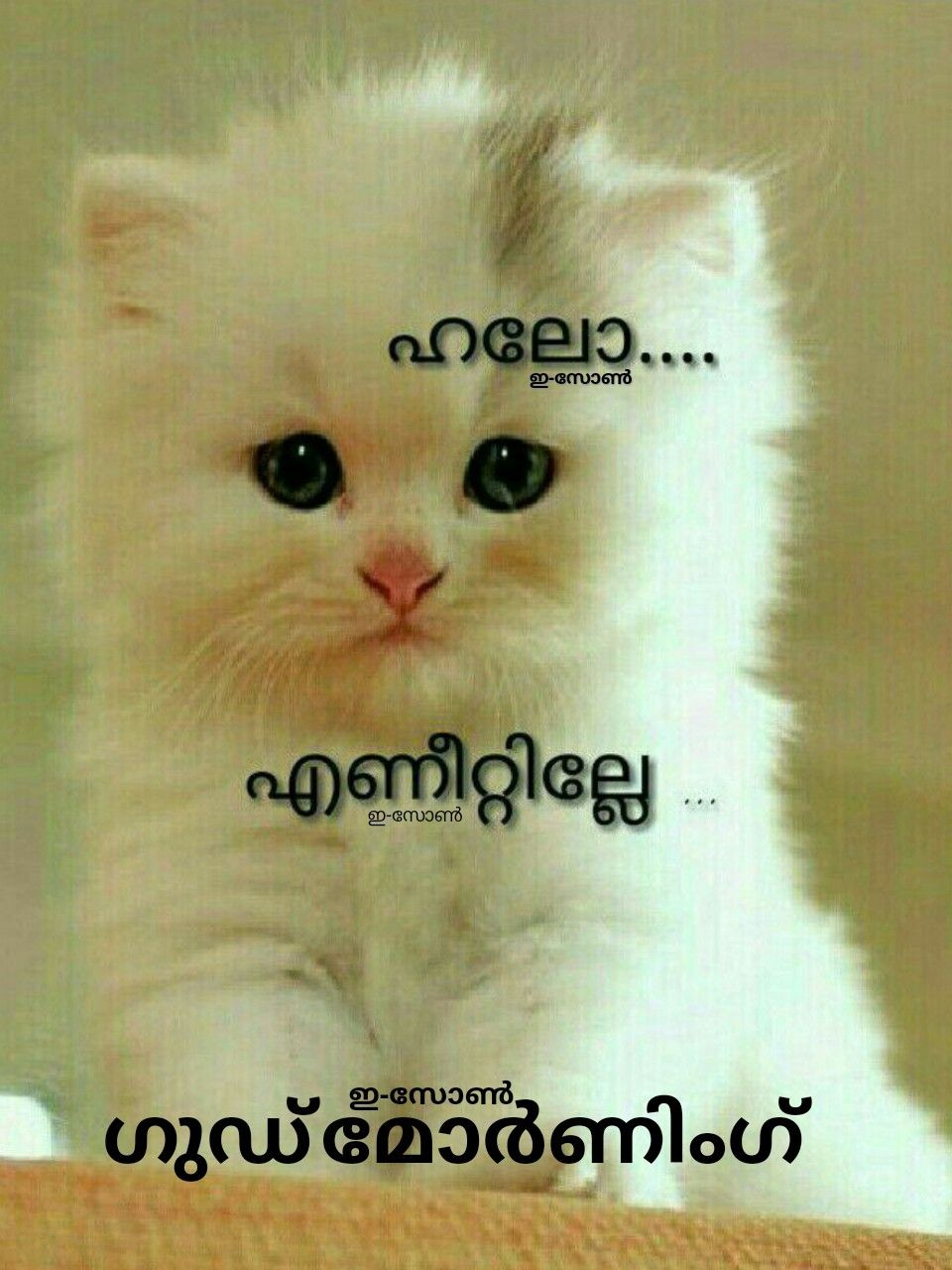 Pin By Laxmi Ramaswamy On Good Morning Malayalam Good Night Thoughts Cute Good Morning Images Good Morning Images Flowers