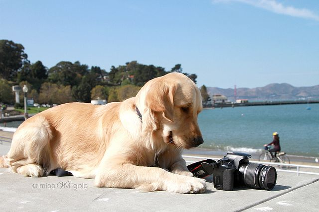 Taking My 1st Photograph In San Francisco Goldens Love