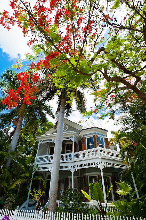 House with wrap around porch and Royal poinciana tree (flame tree) Key West, Florida