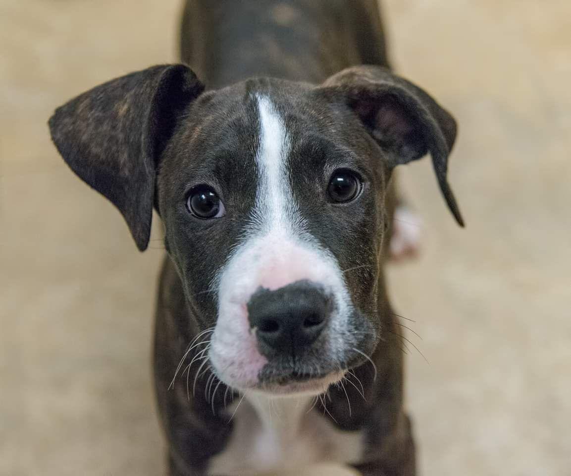 Adopt Ryder on Puppies, Animals, Dogs