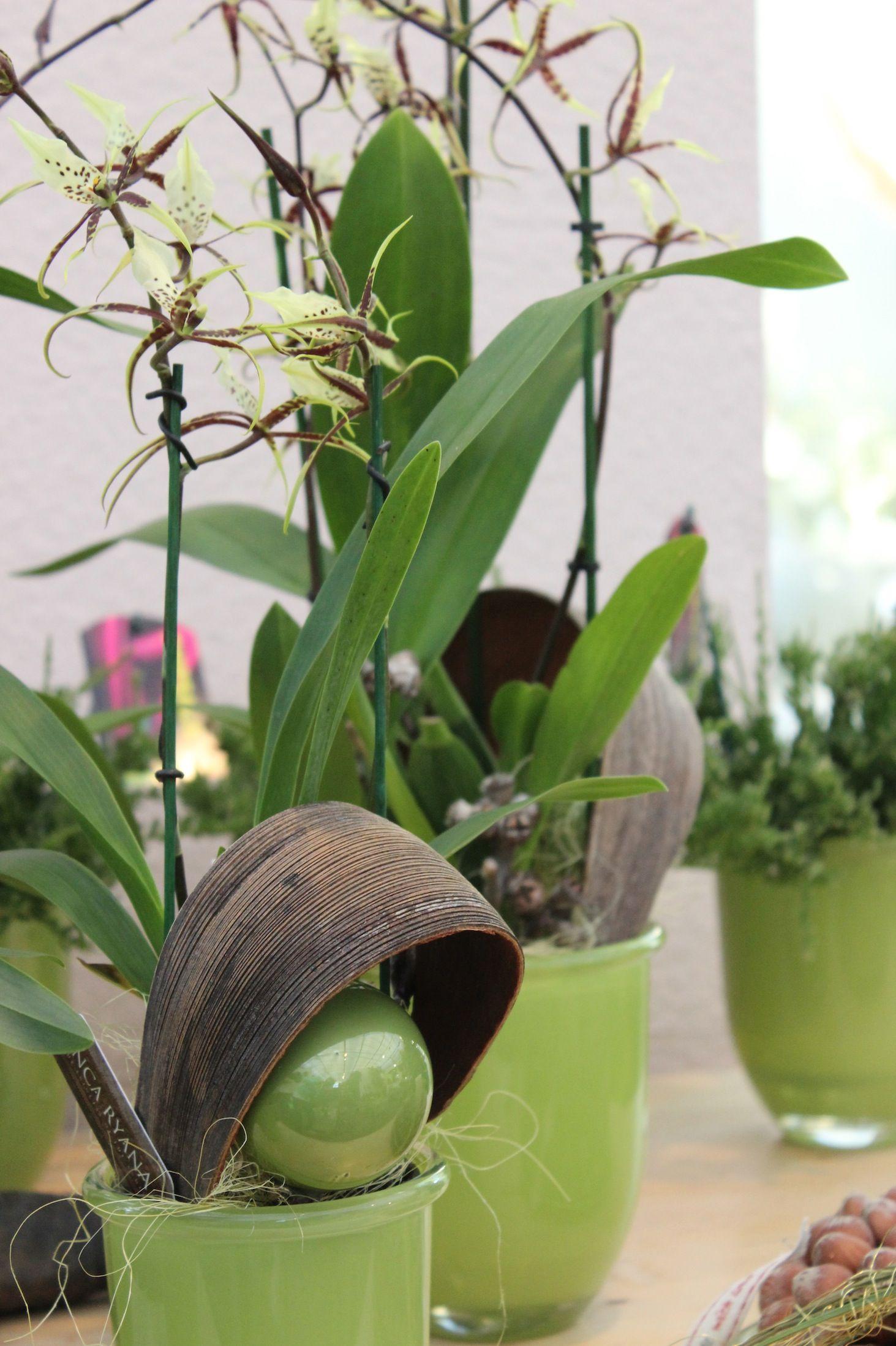 Eine tolle Geschenkidee für Eure Liebsten: Duft-Orchideen
