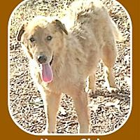Pin By Debra Rainey On Arkansas Pets For Adoption Pets Pet