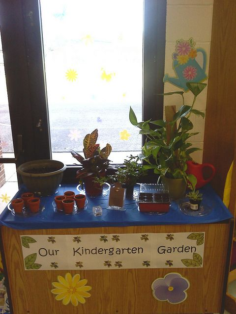 Kindergarten Garden. Who says you can't have an indoor garden in an already crowded classroom? NOT I ! This is our compact, table top, indoor, KINDERGARTEN GARDEN which features peas, beans, pumpkins, sunflowers, grass, a succulent and some assorted foliage. We used tiny clay pots (purchased at the 1$ Store) for our grass and community pots for the other plants. We recorded our garden growth in our Garden Journals We even ATE some of our peas! I used a small magnifying box to showcase the…