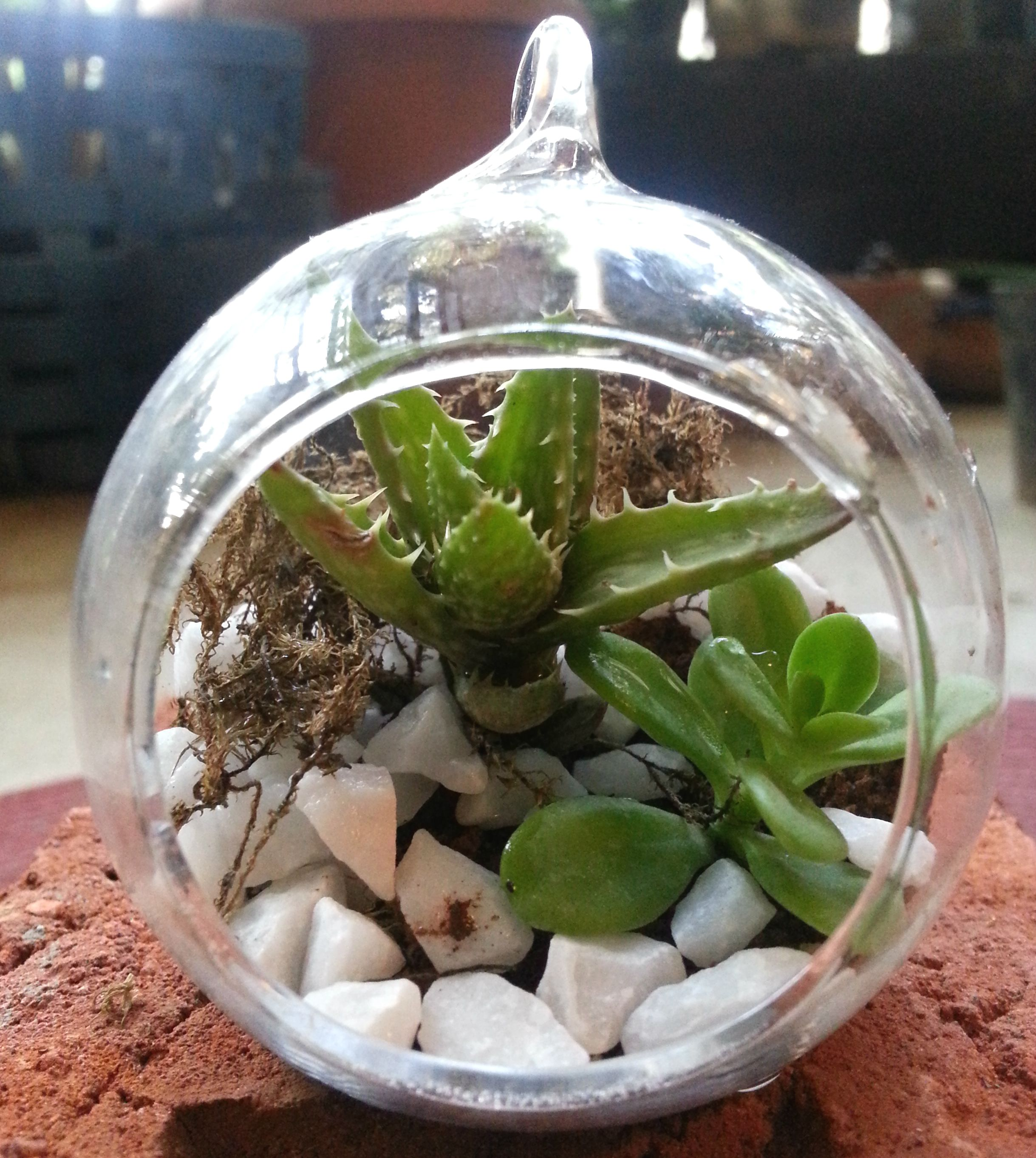 Mini Terrarium Diy Kit Buy Online India Terrarium Terrarium