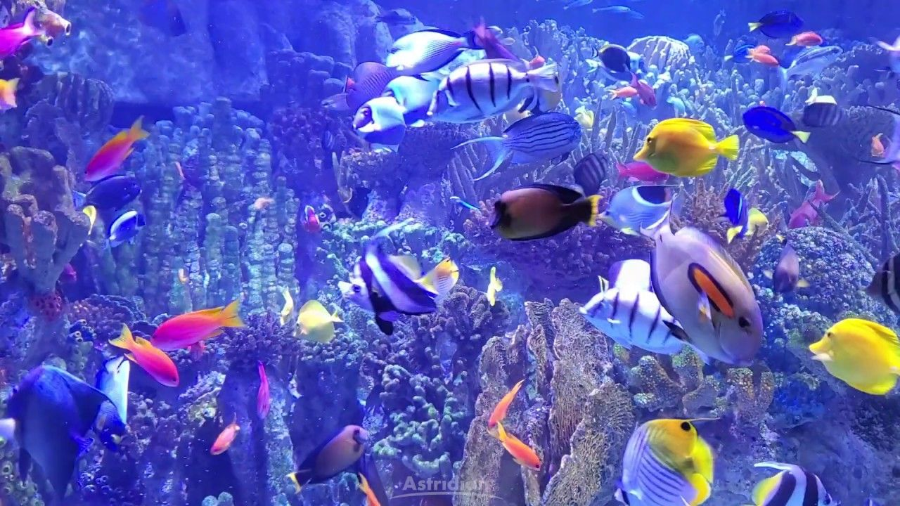 Oxidative Stress, Free Radicals... What does it all mean? Our Fish Friends are here to Explain! 🐠  #antiaging #astridian #oxidativestress #skincare #freeradicals