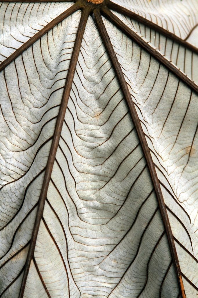 The Veins Of A Leaf Are A Beautiful Intricate Fall Pattern