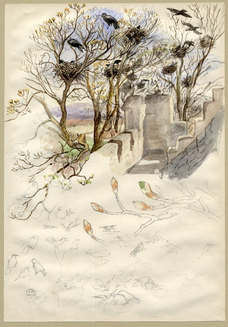 Jemima Blackburn, Rookery; part of a roof with rooks in their nests and perched on the branches of nearby trees, with further studies of buds and birds below Watercolour and graphite