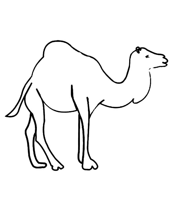 Pin di Camel Coloring Pages