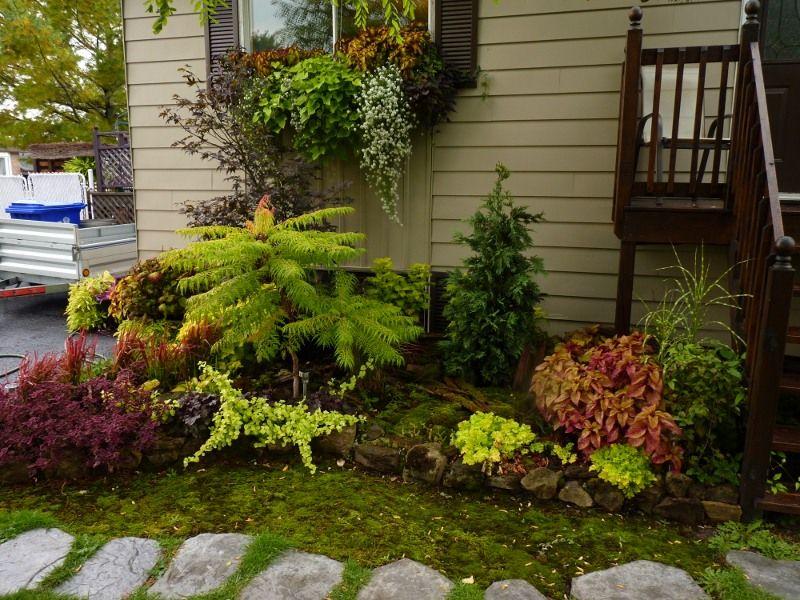plate bande couverte de mousse | Jardin à l\'ombre | Pinterest ...
