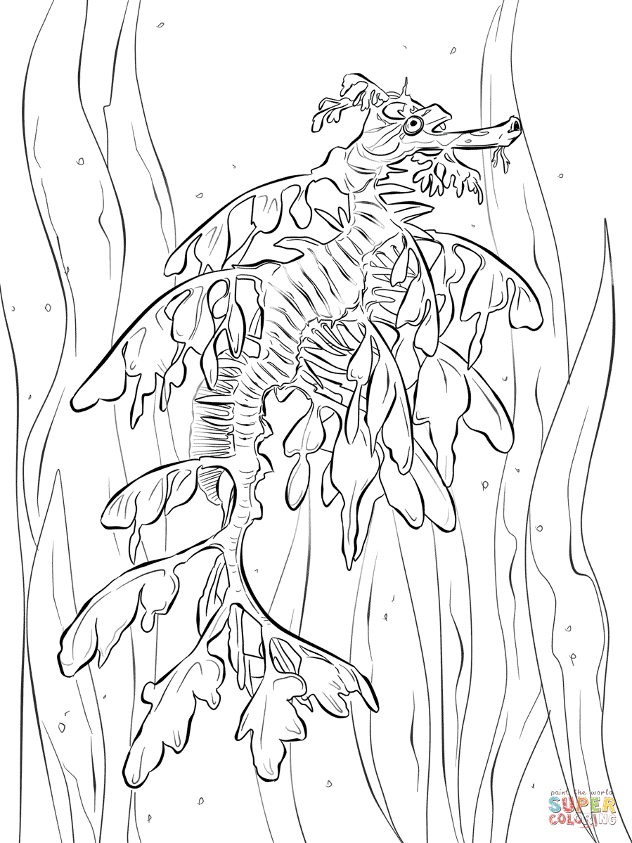 seahorse coloring pages free - Google Search | Coloring Pages ...