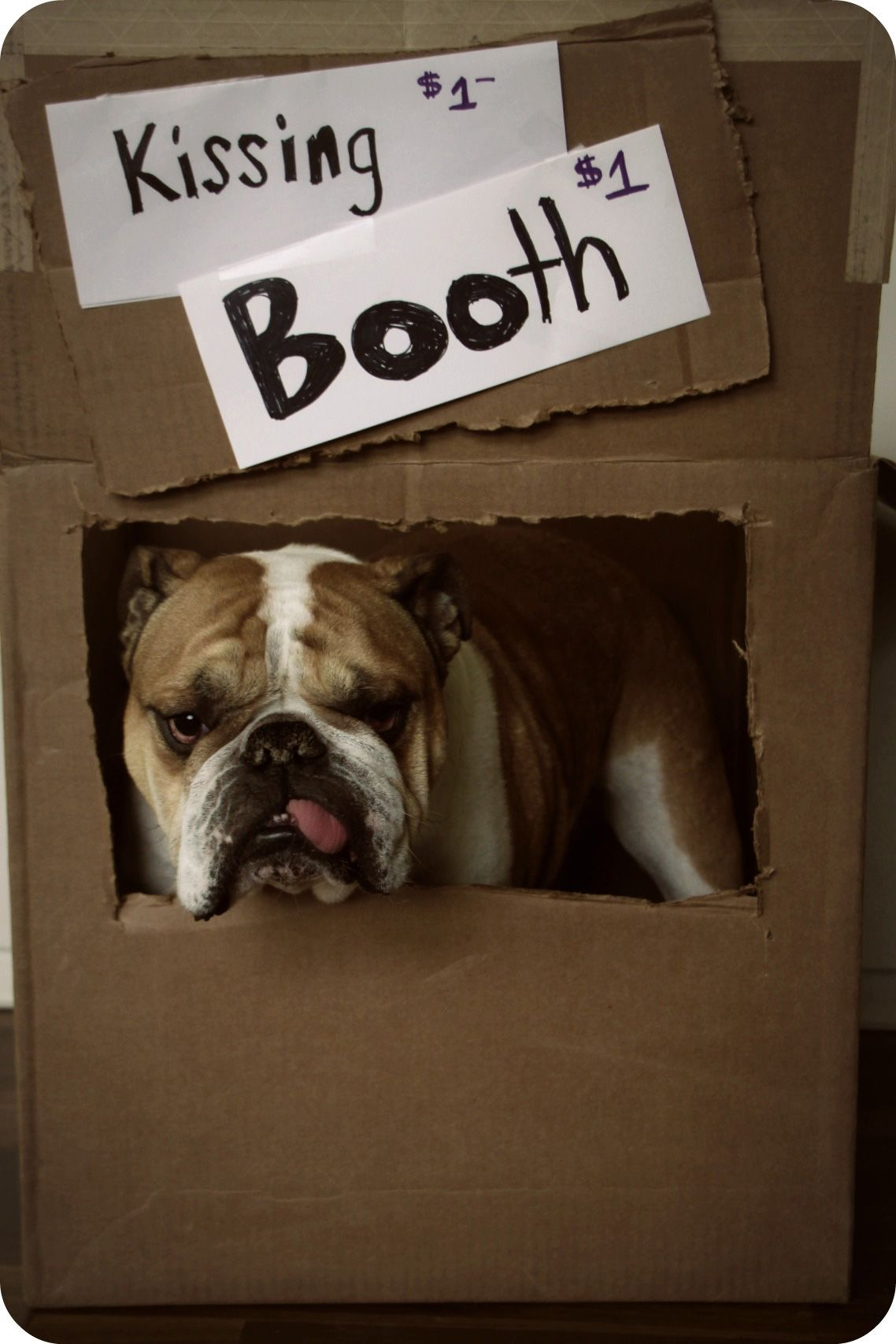 Set up a doggy kissing booth! It's hard to turn down a