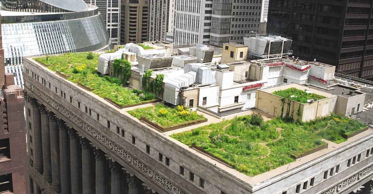 All New Rooftops Must Be Covered In Plants Or Solar Panels In