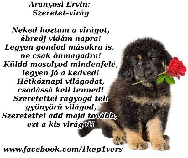 kutyás versek idézetek Aranyosi Ervin: Szeretet    Idézetes album   irmus képtára | Life