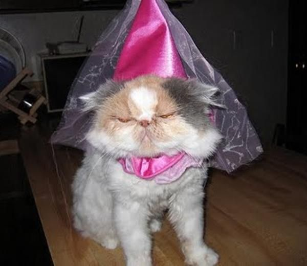 15 hilarious cats in costumes - princess cat