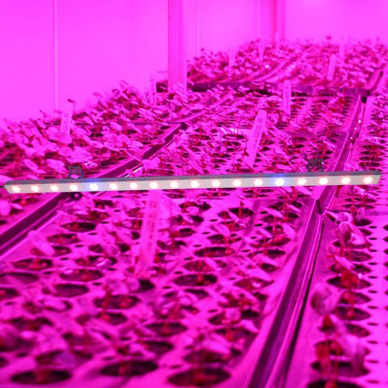 Led Plant Grow Light Greenhouse