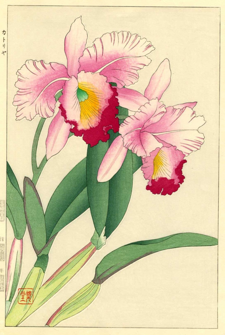 Japanese Woodblock Of An Orchid Japanese Art Styles Japanese Art Flower Art