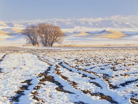 Photographic Print: Plowed Field and Willows in Winter, Bear River Range, Cache Valley, Great Basin, Utah, USA by Scott T. Smith : 24x18in #utahusa