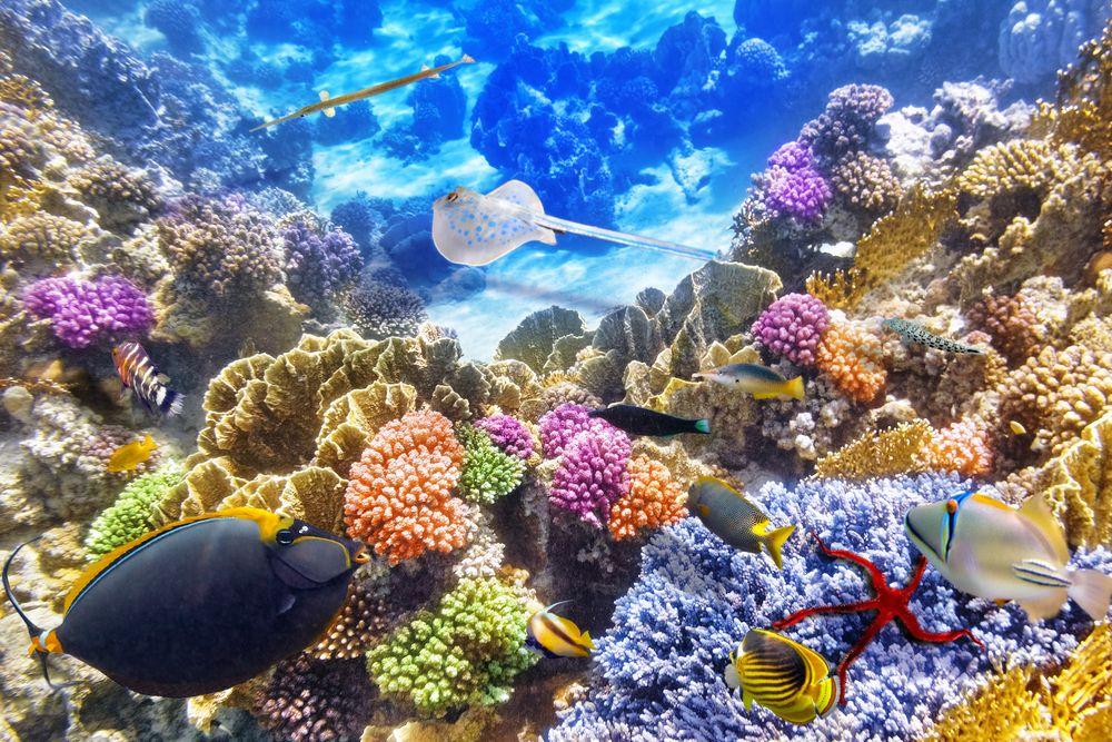 Dangerous Destinations Australias Great Barrier Reef