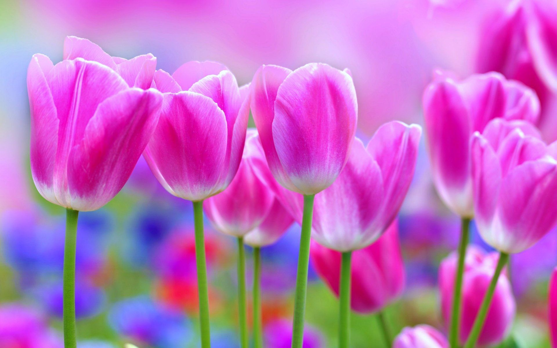 Beautiful flowers wallpaper archives wallpaper hd free Beautiful flowers photos