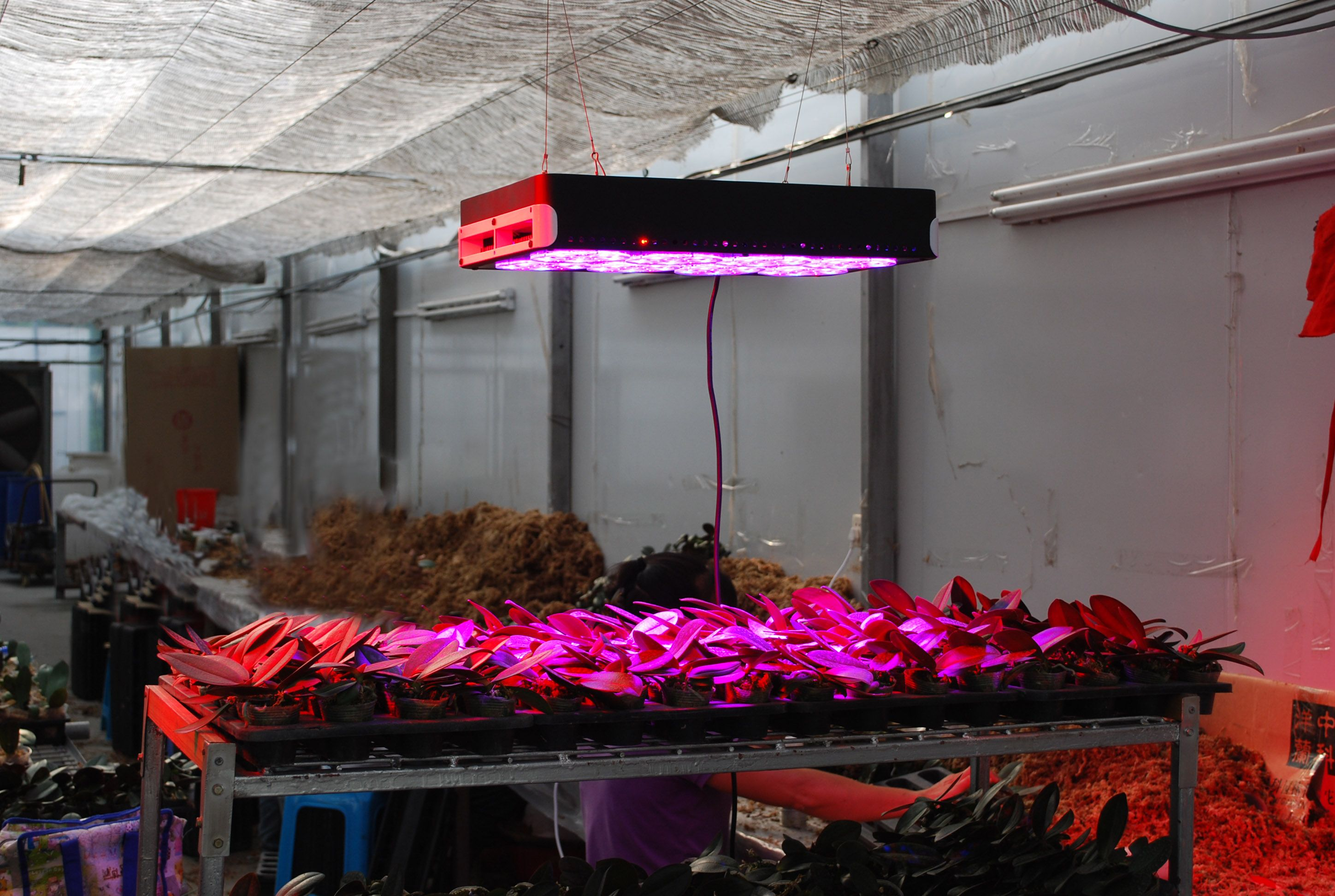 Apollo 8 Hydeoponic System Full Spectrum Cob Grow Light David Sehon Net Plant Lighting Indoor Grow Lights Grow Lights