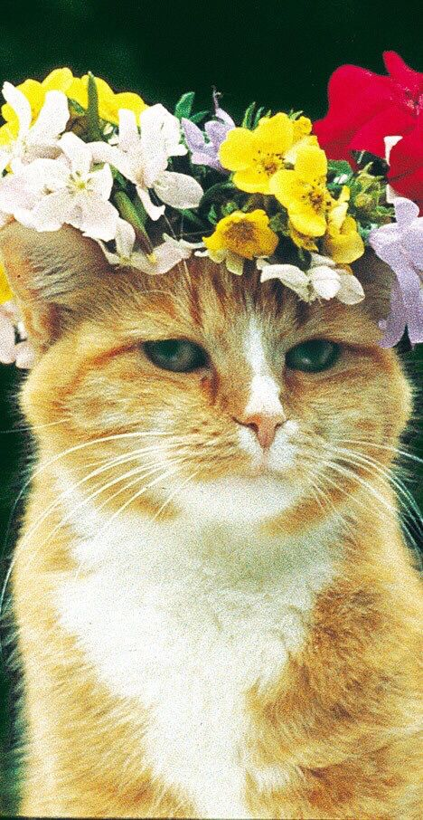 Pretty cat!