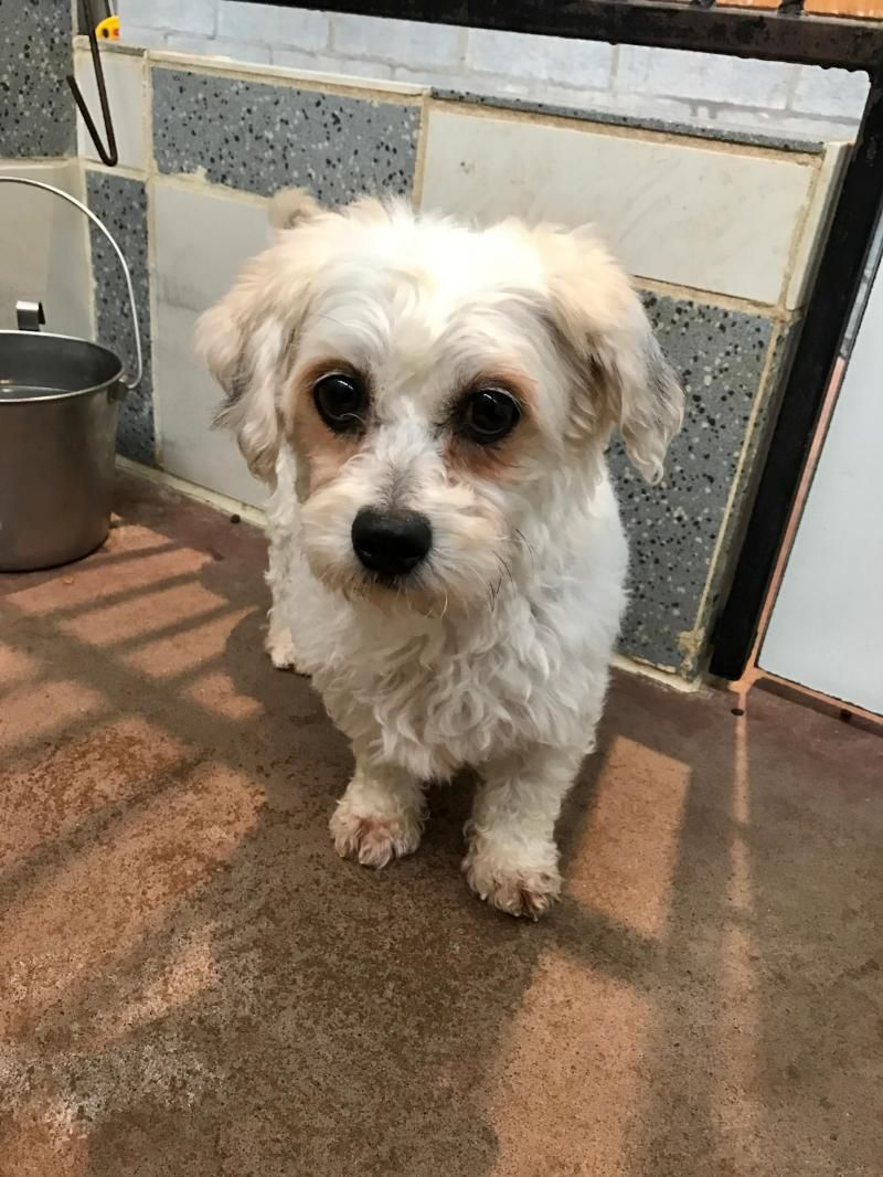 Adopt Jack on Beagle dog, Pet adoption, Animals