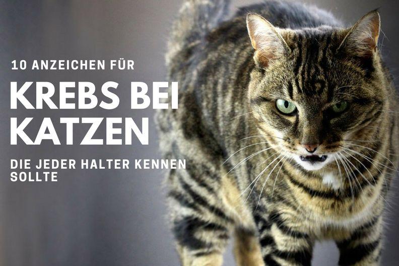 Hat meine Katze Krebs? 10 Anzeichen, die jeder Halter kennen sollte | Cat-News.net