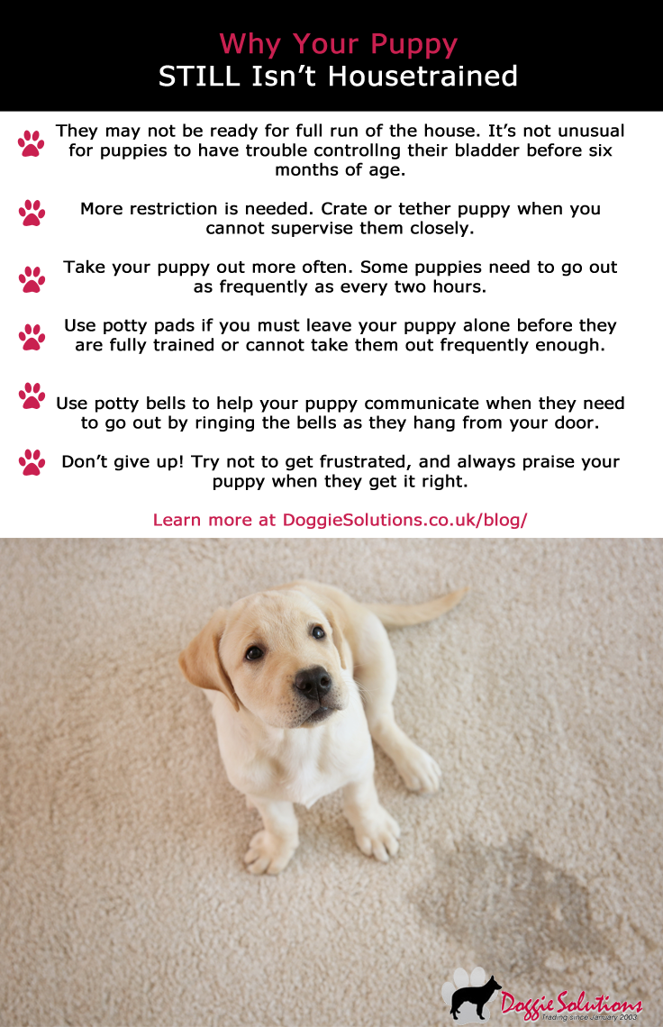 Why Your Puppy Still Isn T Fully Housetrained At Doggie Solutions Online Pet Store House Training Puppies Puppy Training House Training