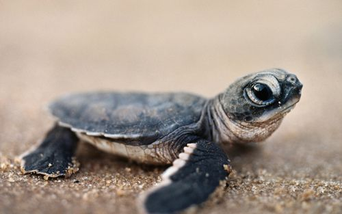 """""""I need some turtles like I've never needed turtles before"""" @Sophie Williams"""