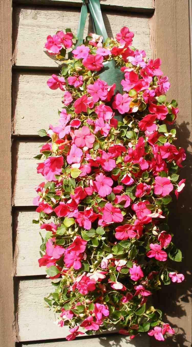 plantes retombantes fleurs et vivaces pour un ext rieur