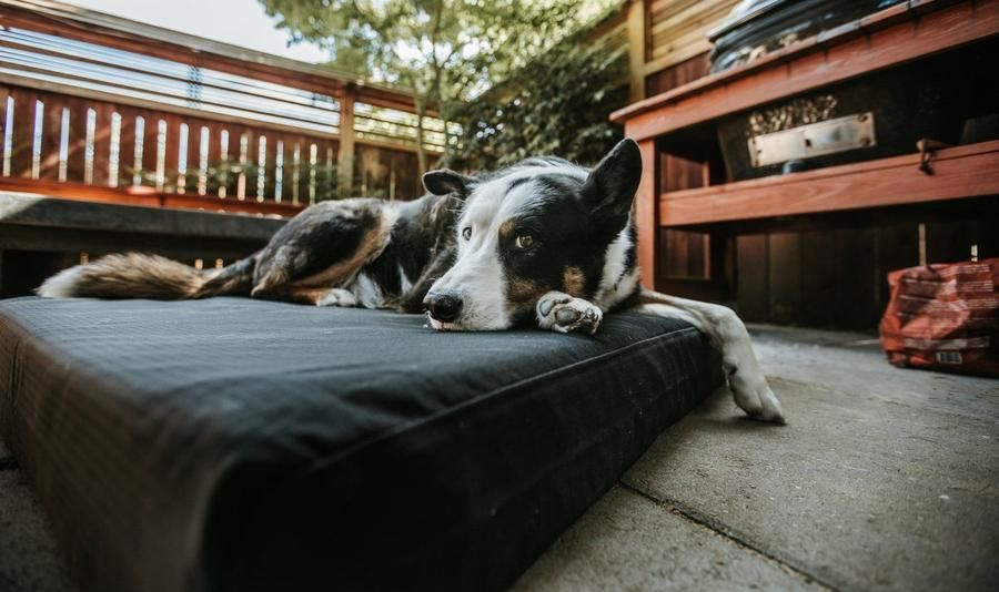Chew Proof Tough Dog Beds Machine Washable K9 Ballistics Tough Dog Beds Giant Dog Beds Washable Dog Bed