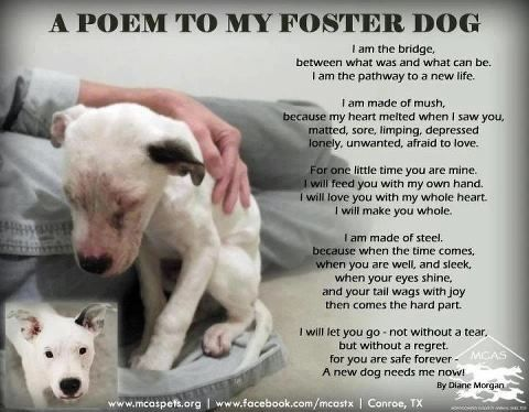 Foster Dogs Quotes Poem To My Foster Dog Motivationsayings