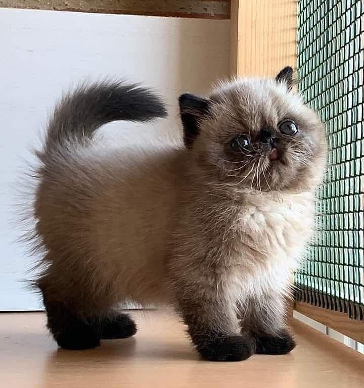Pin Von Jackydesign Auf Katzen In 2020 Niedliche Tiere Haustiere Susse Tiere