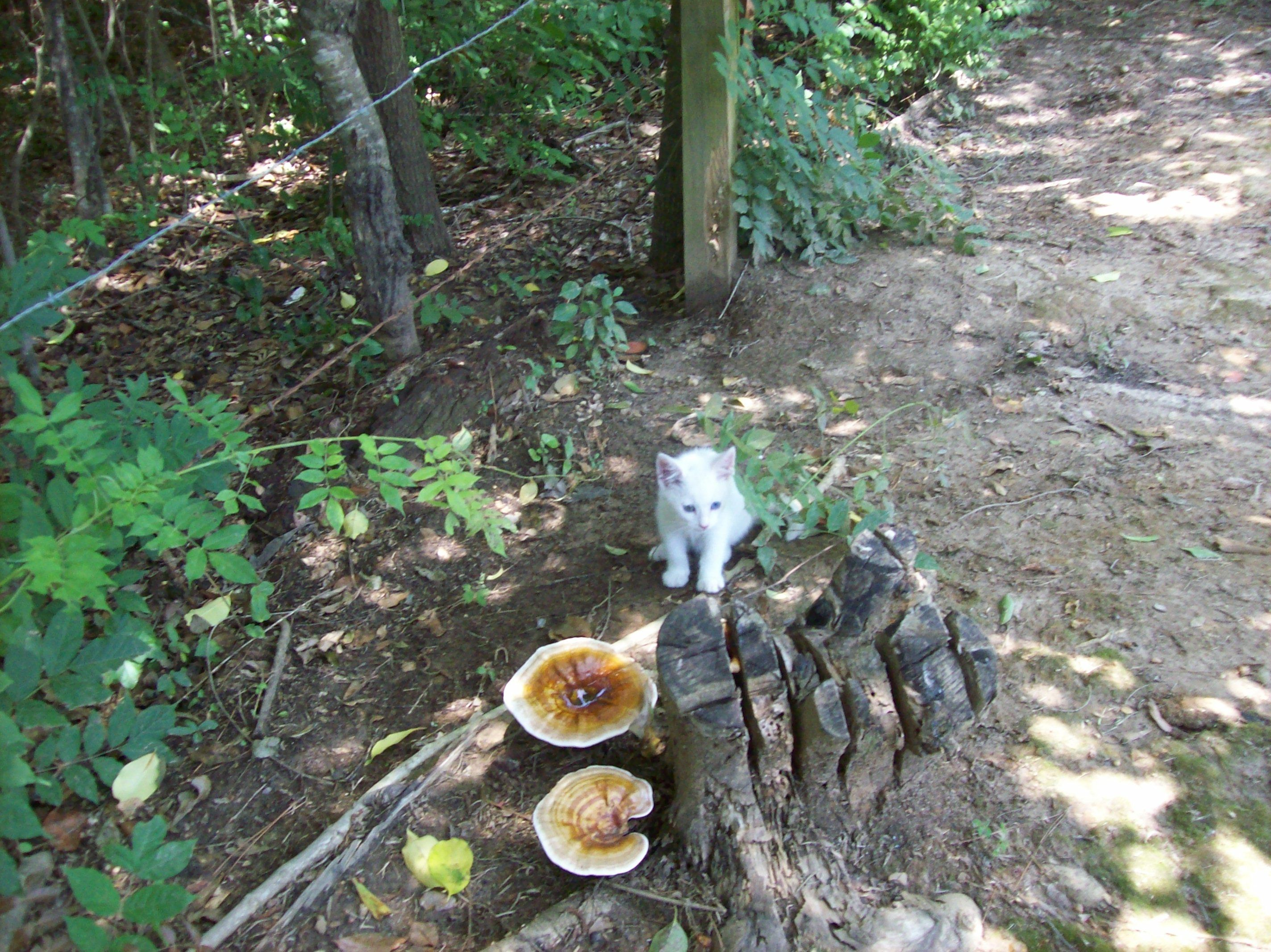 Some cool mushrooms growing in the yard. | Garden, Yard ...