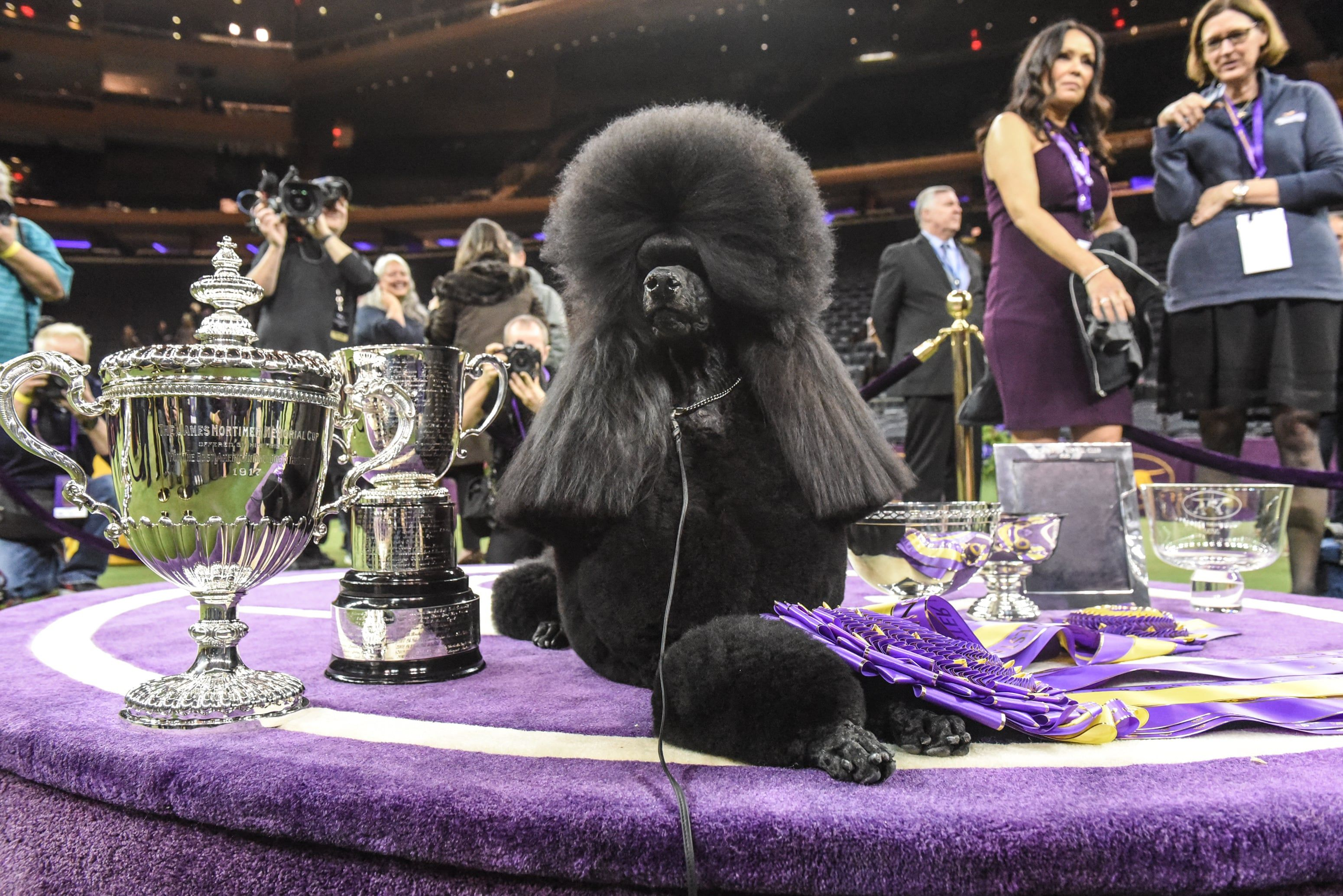 2020 Westminster Kennel Club Dog Show In Pictures Westminster