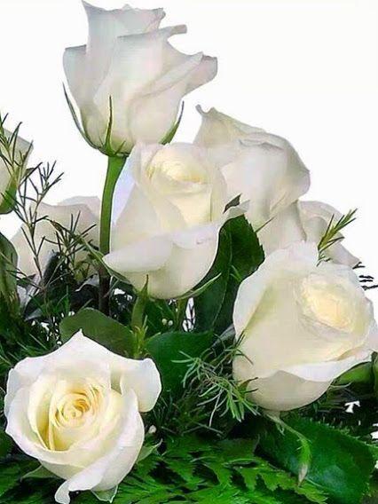 93cbfc612287 Kittike oldala - G-Portál | Rózsák / Roses | Rosas, Rosas lindas és ...