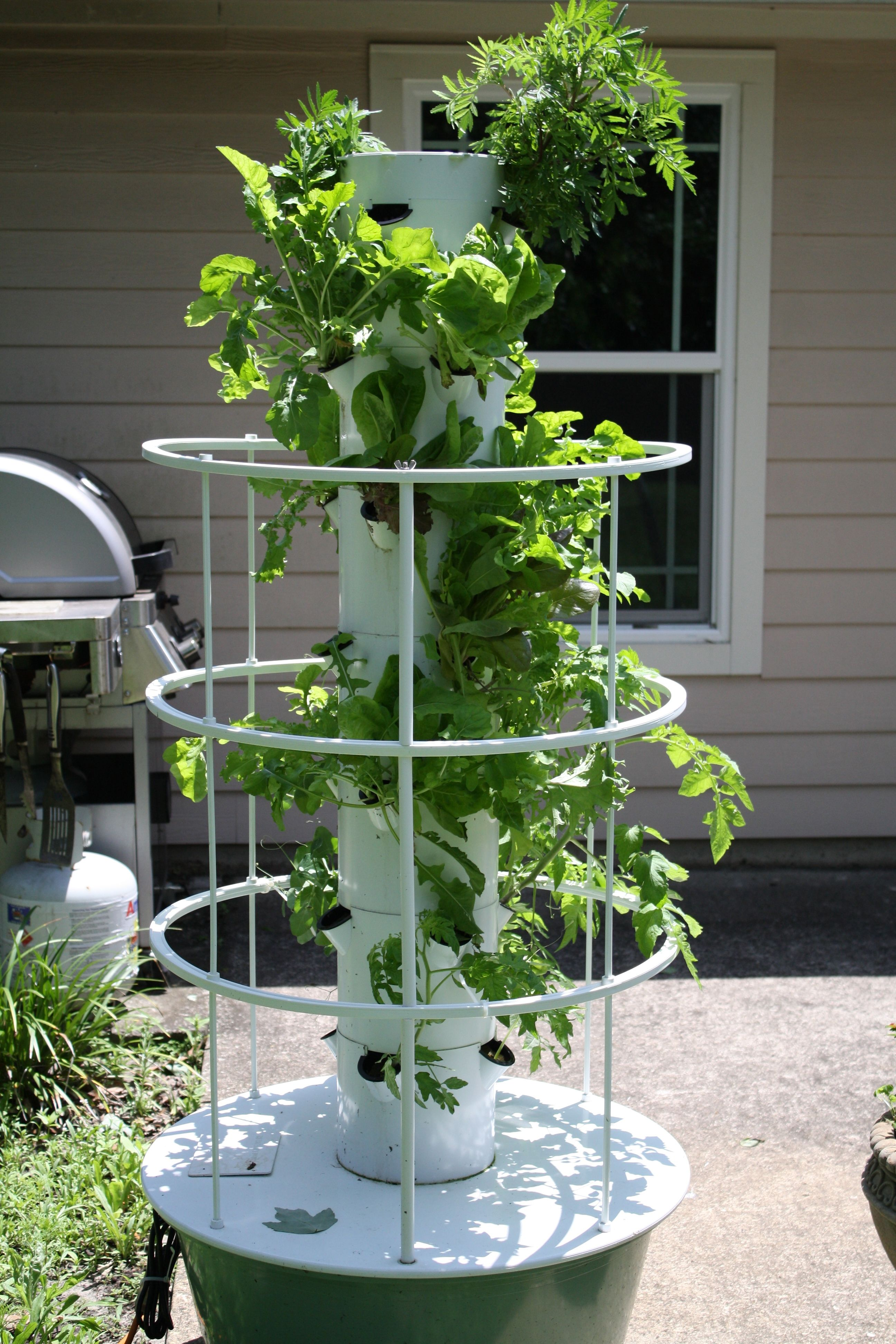 North side of the Tower Garden (Away from the sun) Tower