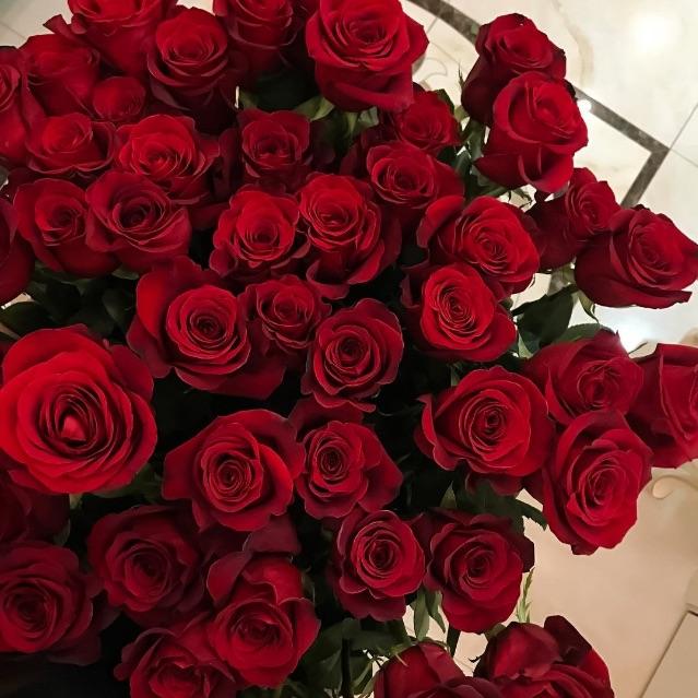 ورد احمر Rose Flowers Plants