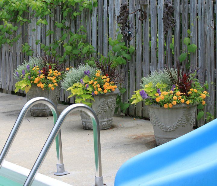 Repeated pattern of flowers in planters by the pool