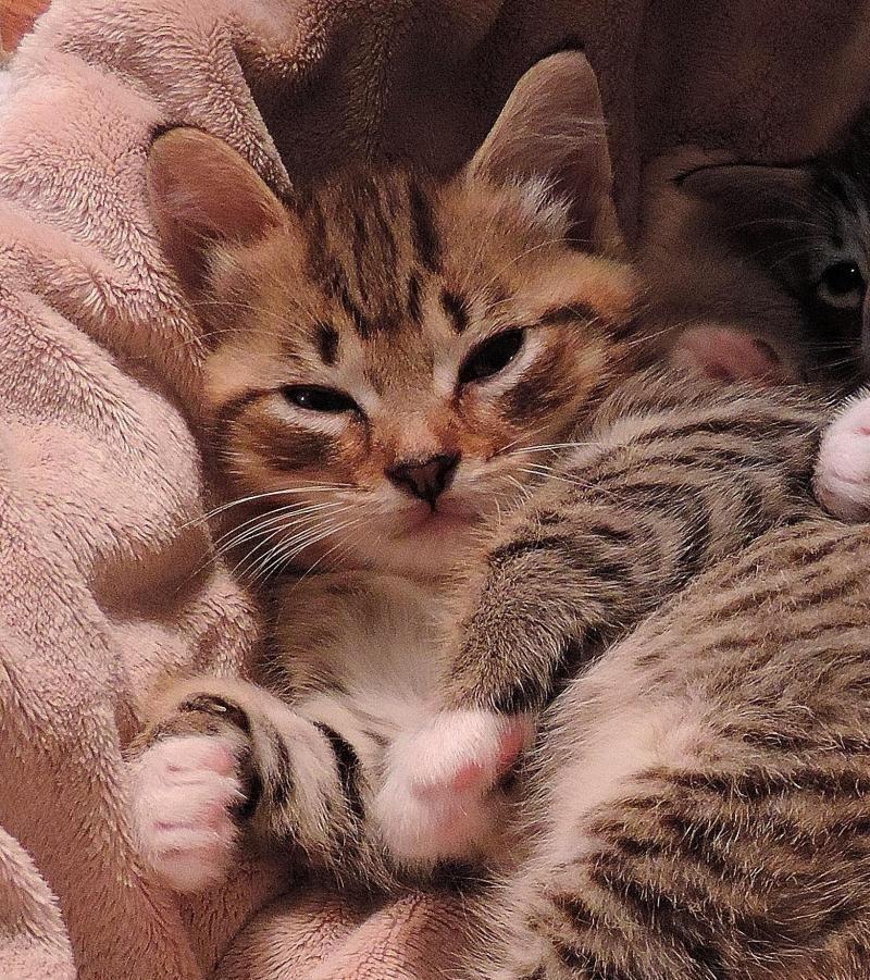 Adopt Tyler On Tabby Pets Kitty