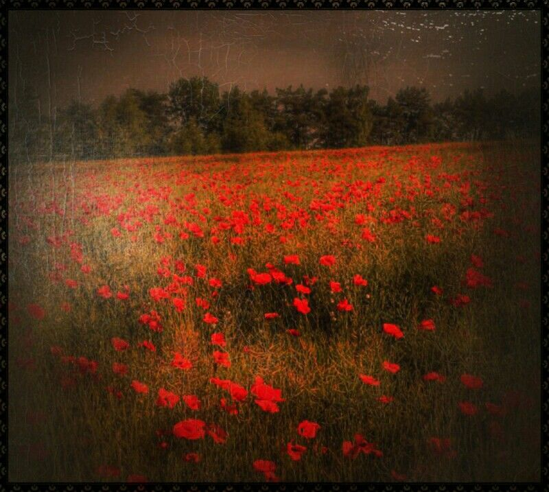 Sea of Poppies...