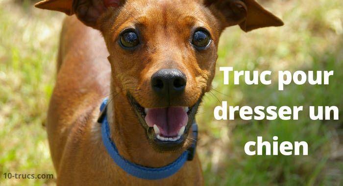 dresser un chien 10 trucs de dressage wouf mon. Black Bedroom Furniture Sets. Home Design Ideas